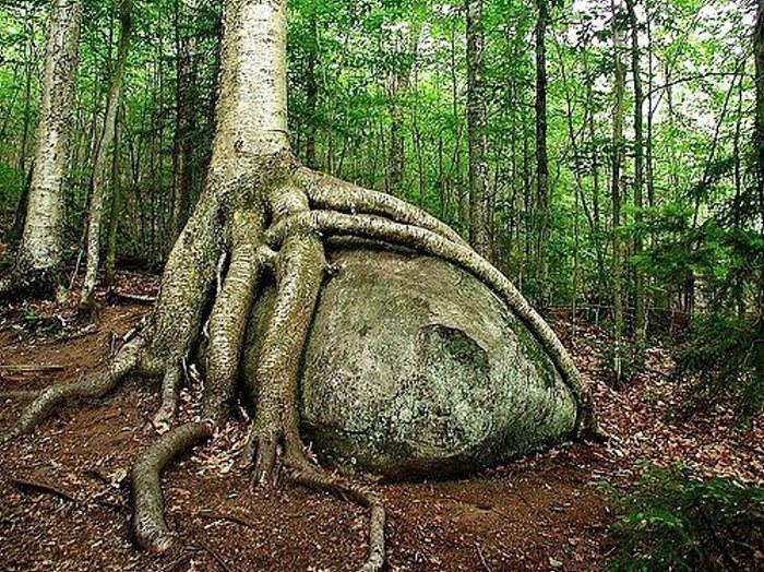[Image: creepy-tree-2.jpg]