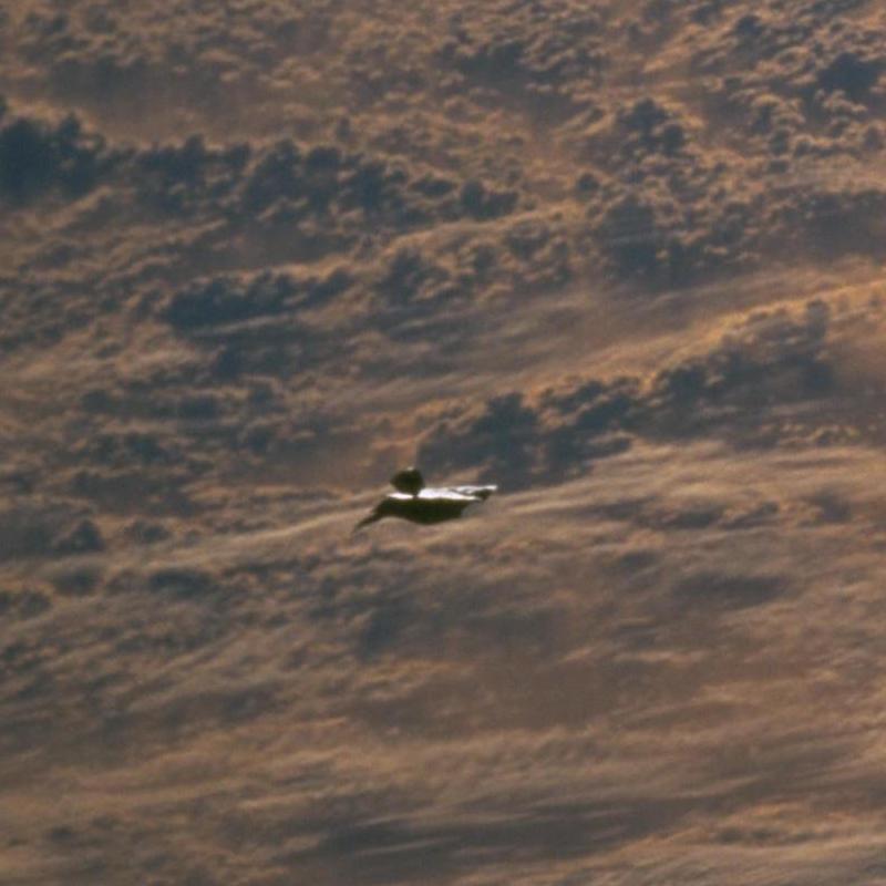 NASA STS-88 Black Knight Satellite? Black Transforming UFO ...