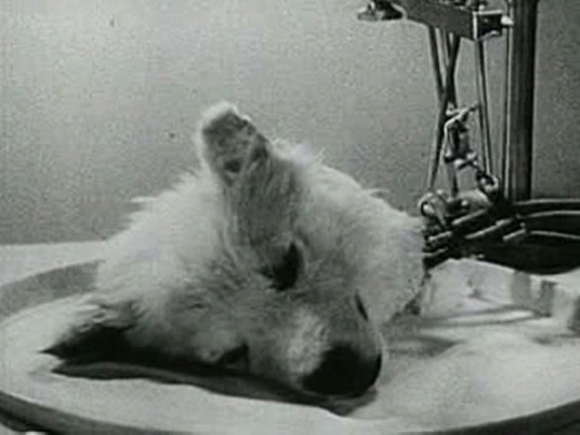 Bodyless Dog's head brought back to life - 1940's Russian ...